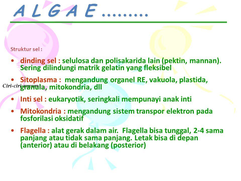 A L G A E ……… Struktur sel : dinding sel : selulosa dan polisakarida lain (pektin, mannan). Sering dilindungi matrik gelatin yang fleksibel.