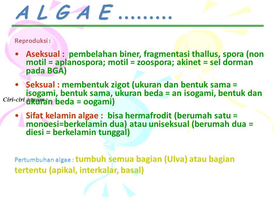 A L G A E ……… Reproduksi :
