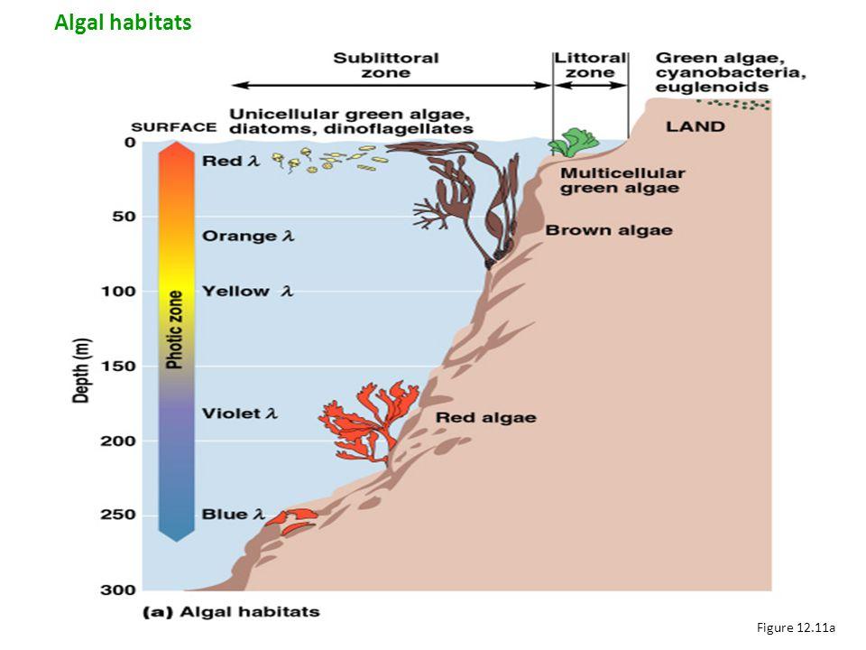 Algal habitats Figure 12.11a