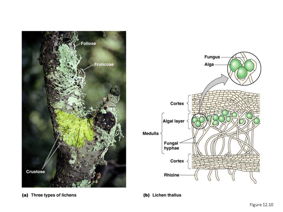 Lichens Figure 12.10