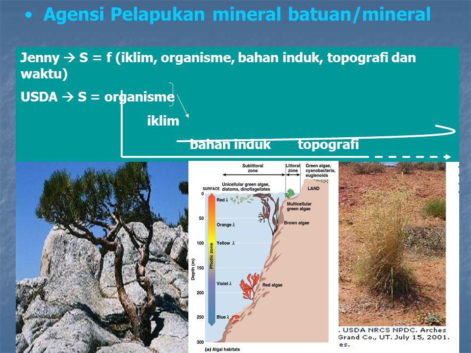 Agensi Pelapukan mineral batuan/mineral