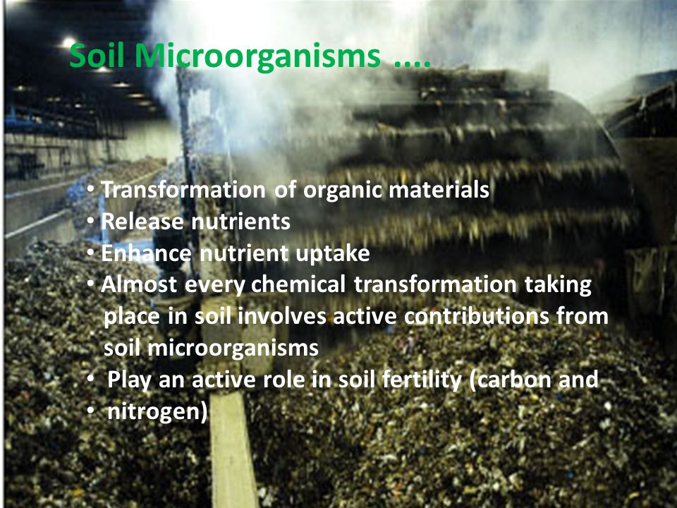 Soil Microorganisms .... Transformation of organic materials