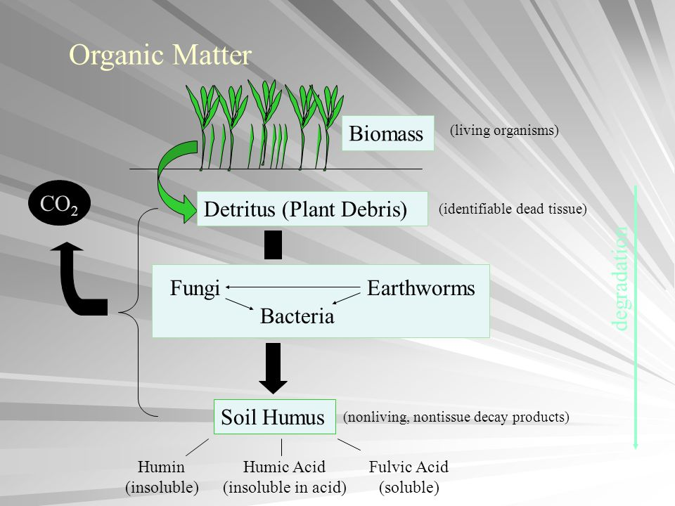 Organic Matter Biomass CO2 Detritus (Plant Debris) degradation Fungi