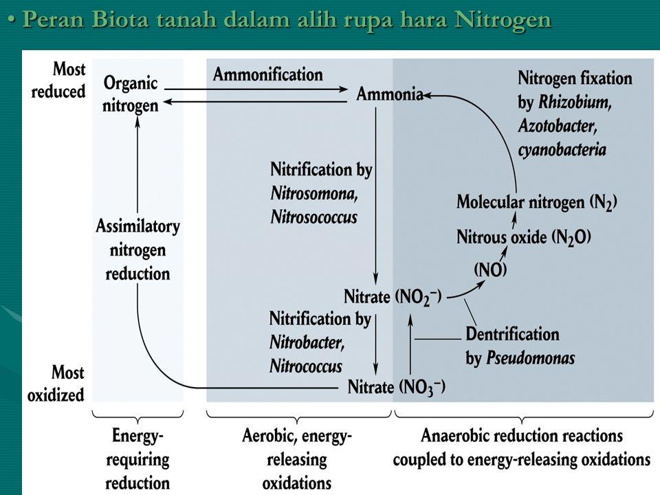 Peran Biota tanah dalam alih rupa hara Nitrogen