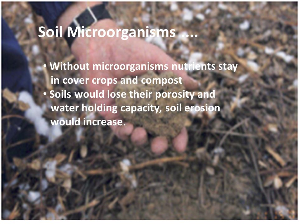 Soil Microorganisms .... Without microorganisms nutrients stay