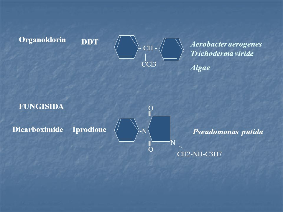 Aerobacter aerogenes Trichoderma viride Algae