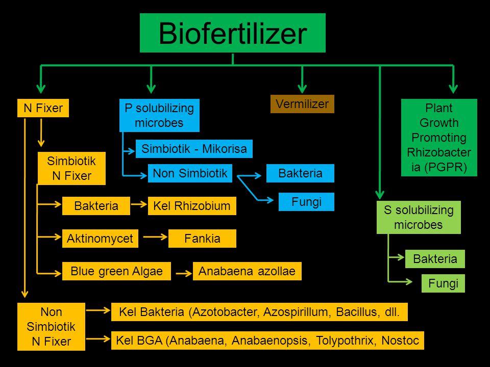 Biofertilizer Vermilizer N Fixer P solubilizing microbes