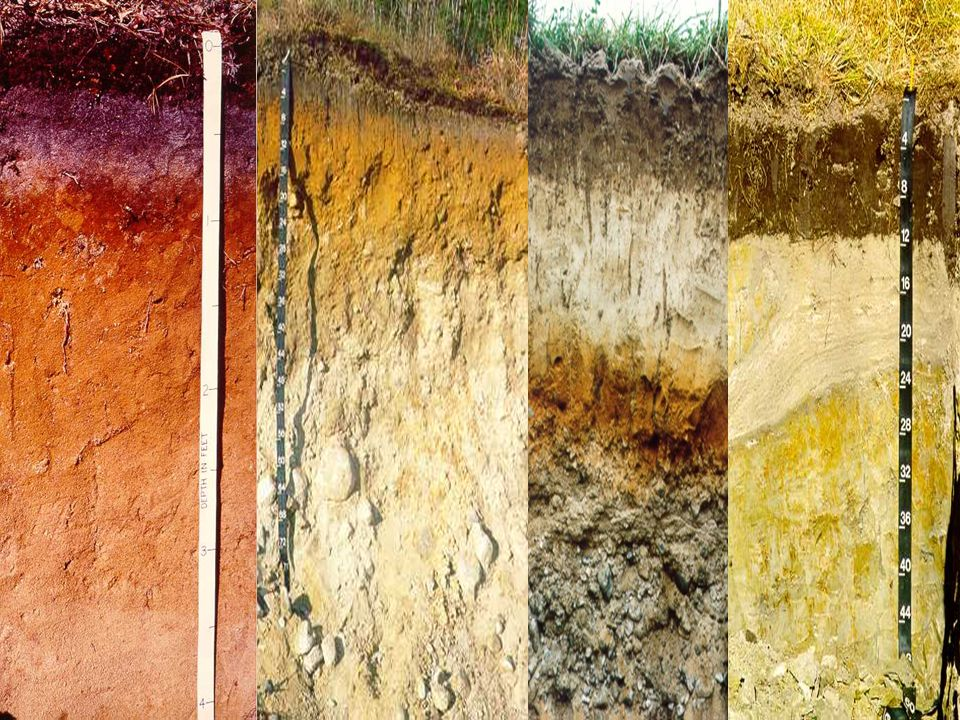 First I want to tell you about is soil color