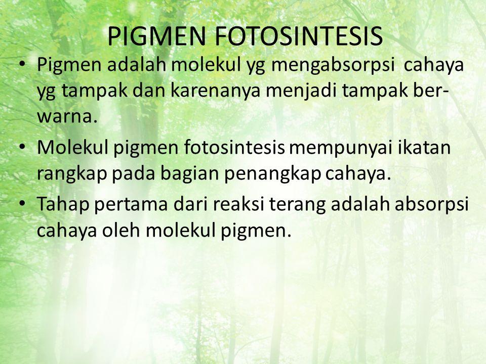 PIGMEN FOTOSINTESIS Pigmen adalah molekul yg mengabsorpsi cahaya yg tampak dan karenanya menjadi tampak ber-warna.