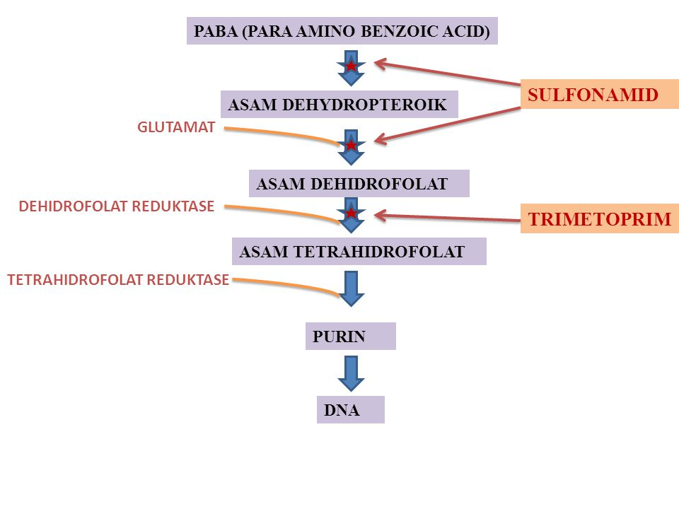 SULFONAMID TRIMETOPRIM PABA (PARA AMINO BENZOIC ACID)