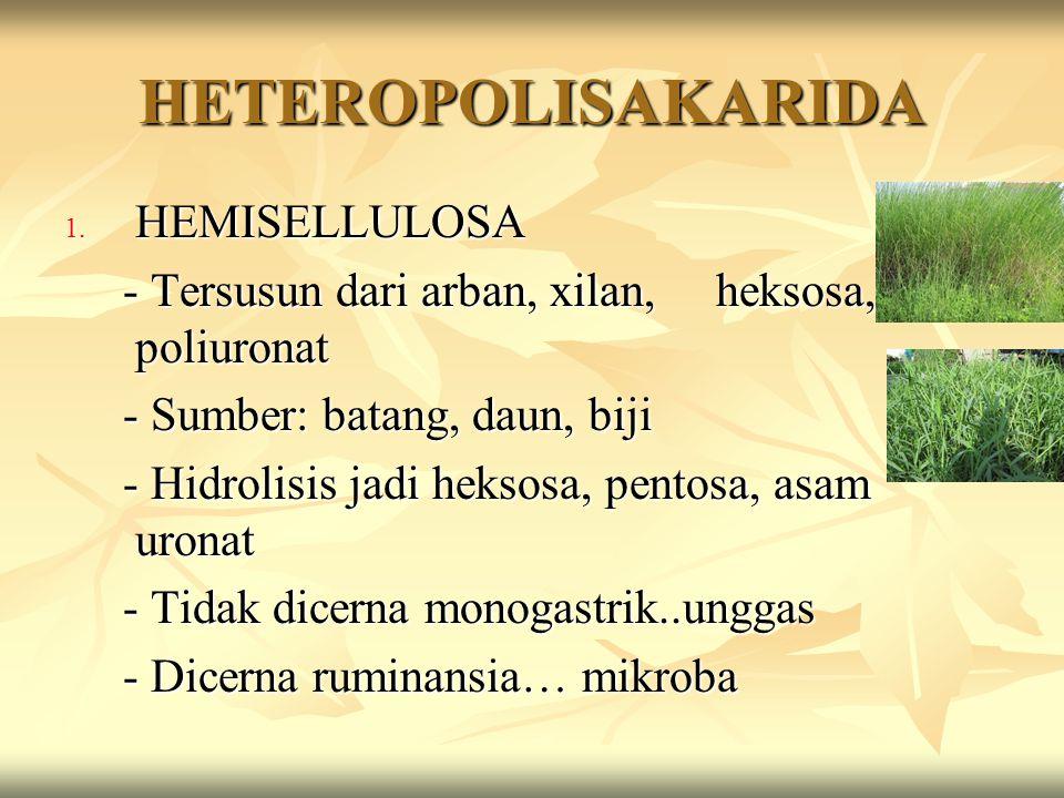 HETEROPOLISAKARIDA HEMISELLULOSA