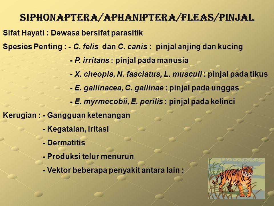 SIPHONAPTERA/APHANIPTERA/FLEAS/PINJAL