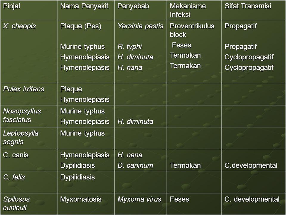 Pinjal Nama Penyakit. Penyebab. Mekanisme Infeksi. Sifat Transmisi. X. cheopis. Plaque (Pes) Murine typhus.