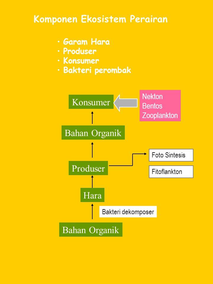 Komponen Ekosistem Perairan