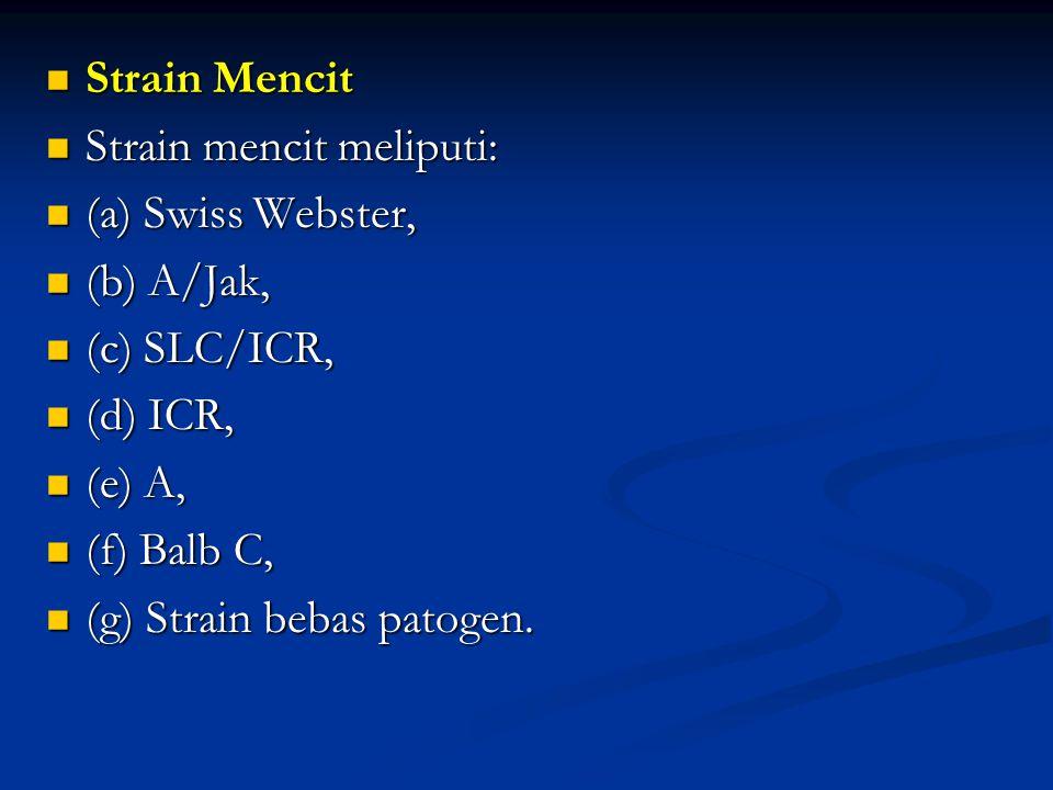 Strain Mencit Strain mencit meliputi: (a) Swiss Webster, (b) A/Jak, (c) SLC/ICR, (d) ICR, (e) A,