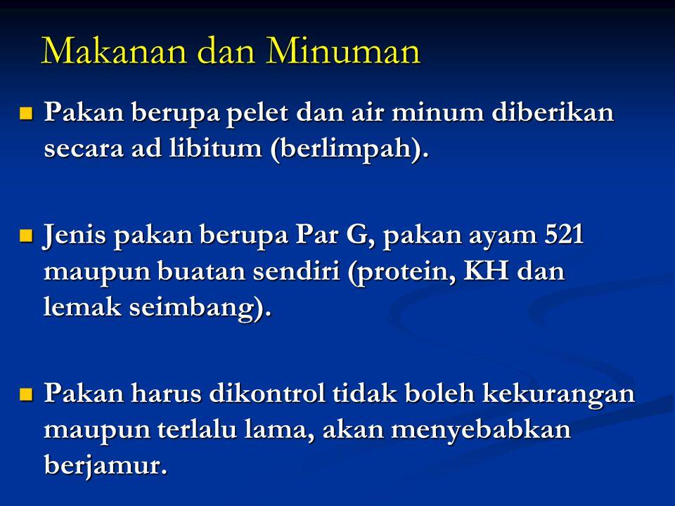 Makanan dan Minuman Pakan berupa pelet dan air minum diberikan secara ad libitum (berlimpah).