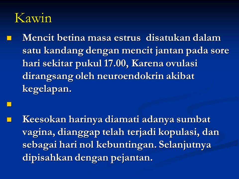 Kawin