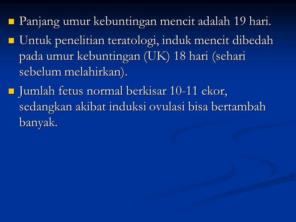 Panjang umur kebuntingan mencit adalah 19 hari.