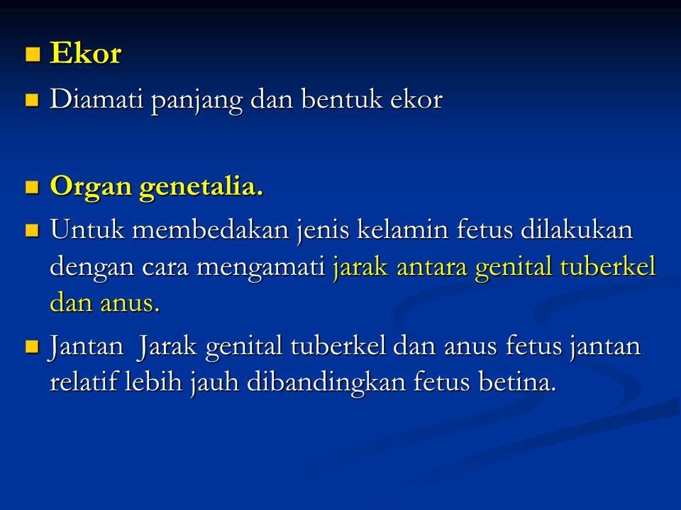 Ekor Diamati panjang dan bentuk ekor Organ genetalia.