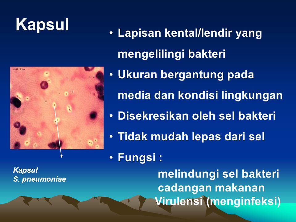 Kapsul Lapisan kental/lendir yang mengelilingi bakteri