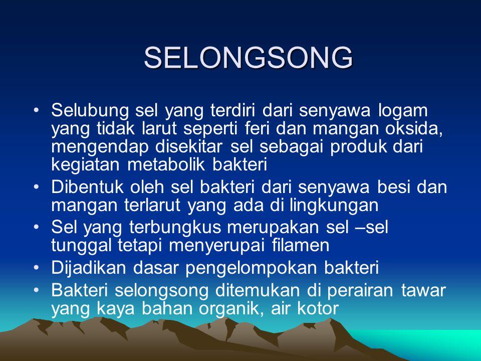 SELONGSONG