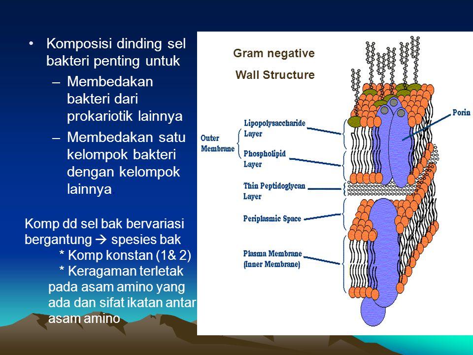 Komposisi dinding sel bakteri penting untuk