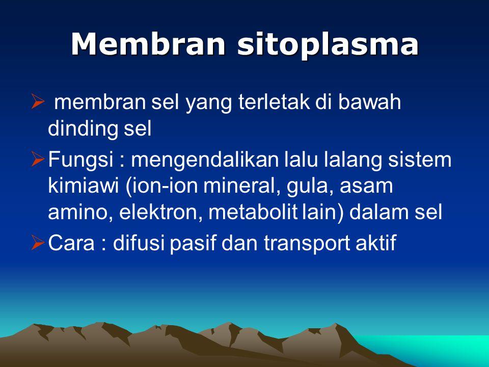 Membran sitoplasma membran sel yang terletak di bawah dinding sel