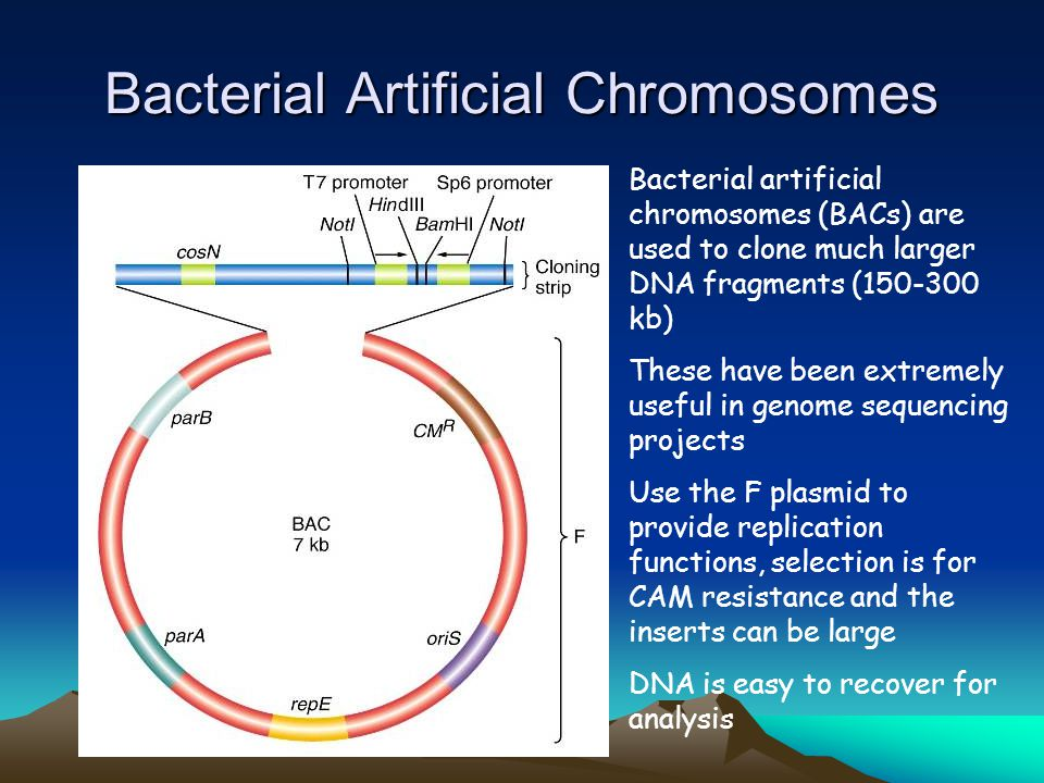 Bacterial Artificial Chromosomes