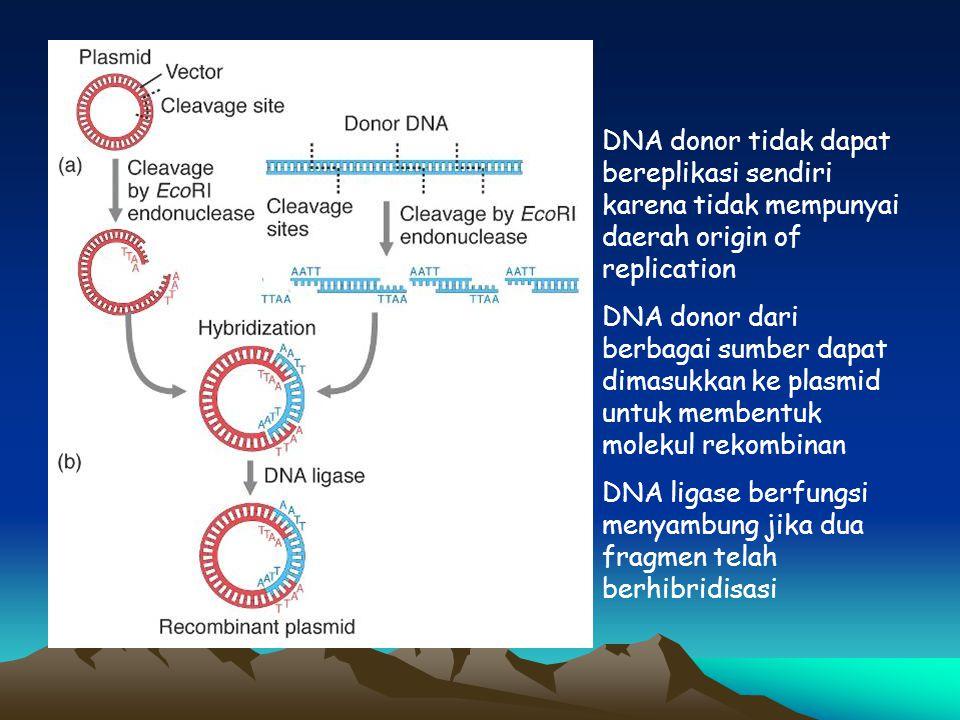 DNA donor tidak dapat bereplikasi sendiri karena tidak mempunyai daerah origin of replication