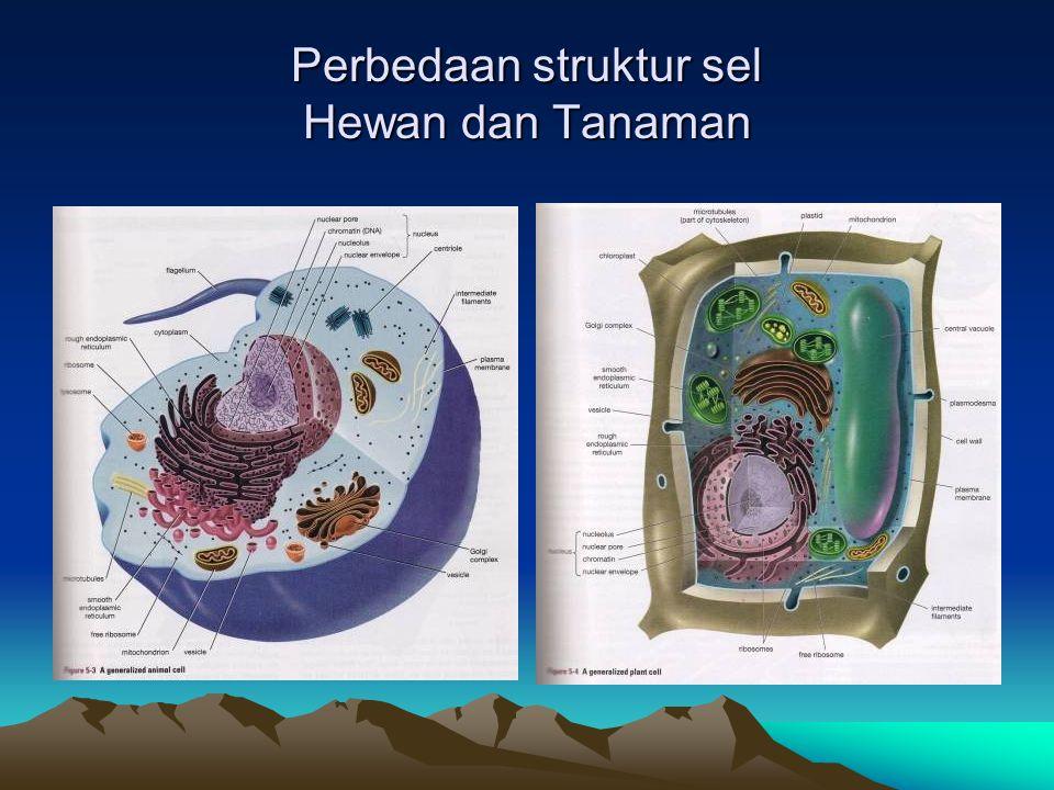 Perbedaan struktur sel Hewan dan Tanaman