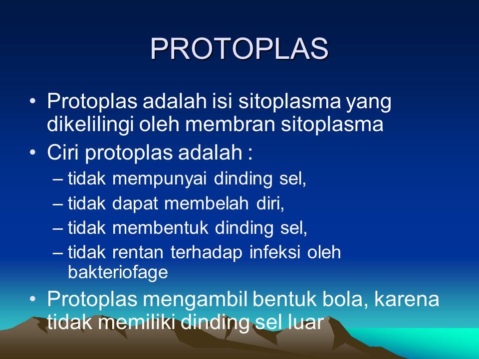 PROTOPLAS Protoplas adalah isi sitoplasma yang dikelilingi oleh membran sitoplasma. Ciri protoplas adalah :