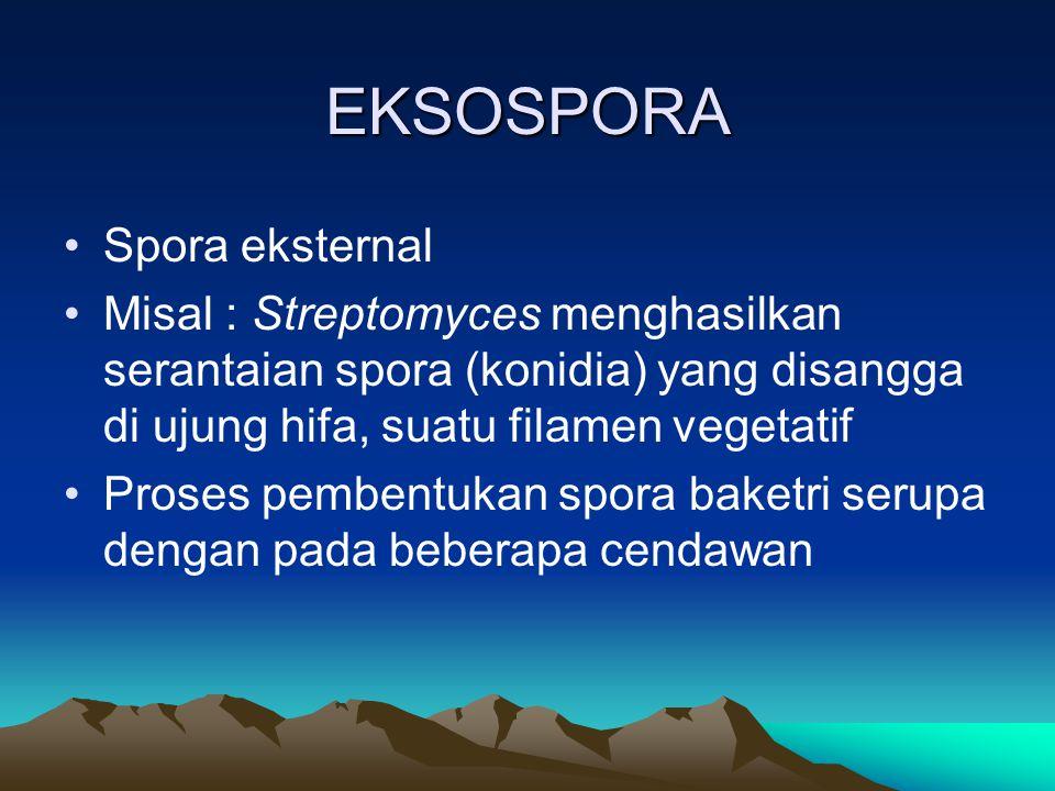 EKSOSPORA Spora eksternal