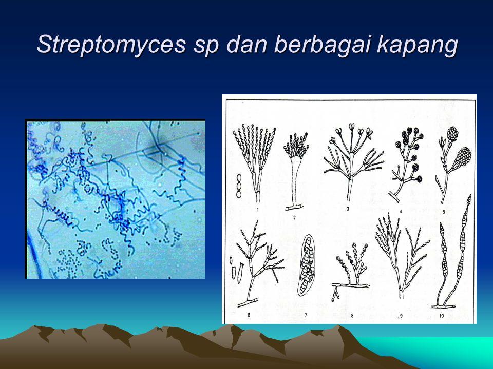 Streptomyces sp dan berbagai kapang