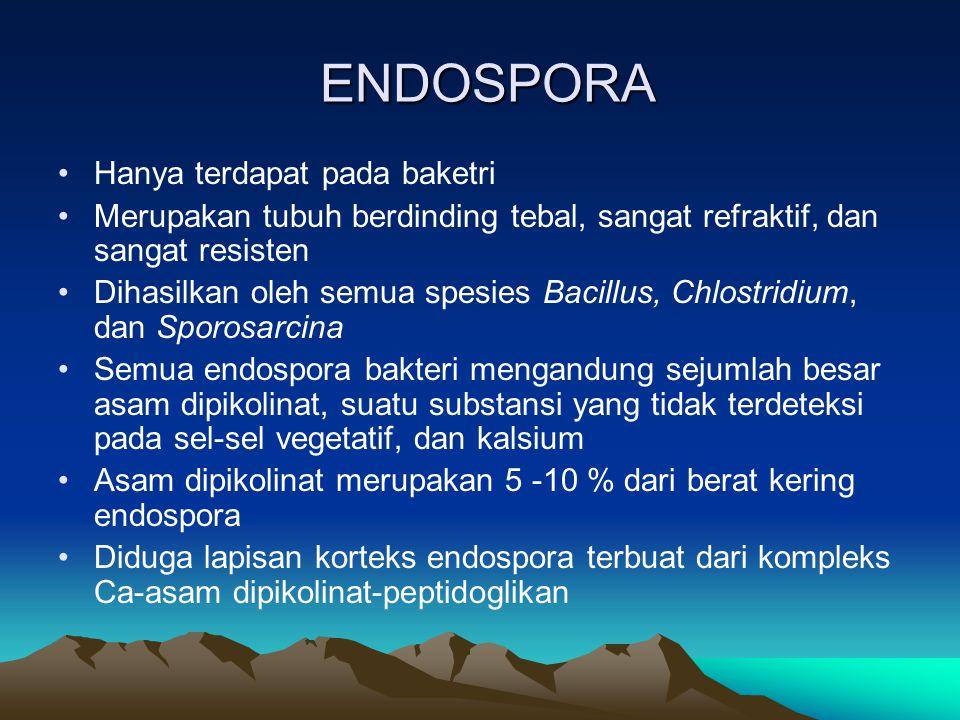 ENDOSPORA Hanya terdapat pada baketri