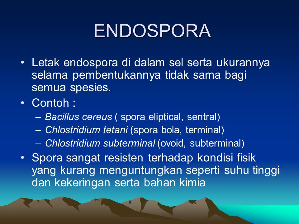 ENDOSPORA Letak endospora di dalam sel serta ukurannya selama pembentukannya tidak sama bagi semua spesies.