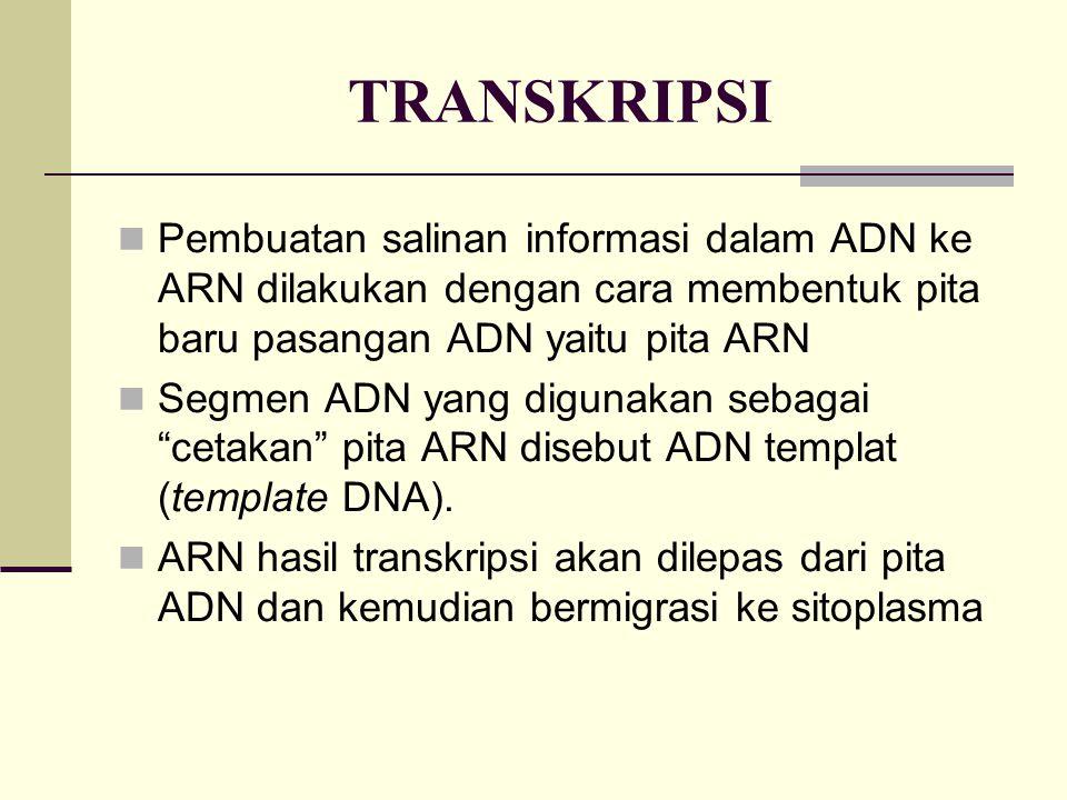 TRANSKRIPSI Pembuatan salinan informasi dalam ADN ke ARN dilakukan dengan cara membentuk pita baru pasangan ADN yaitu pita ARN.