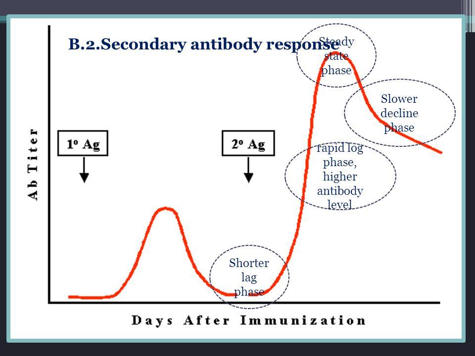 rapid log phase, higher antibody level