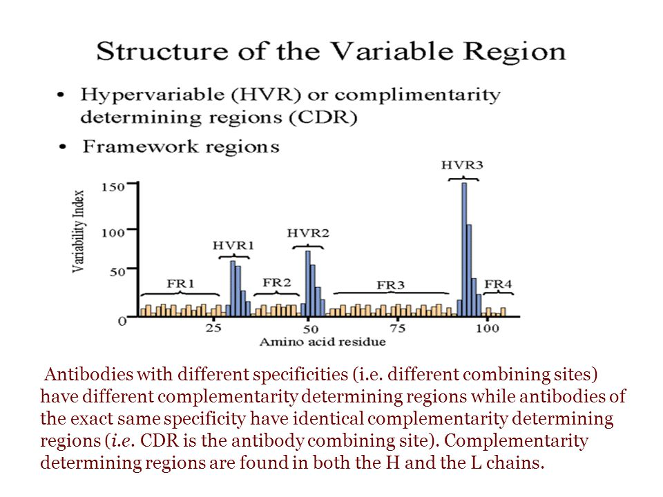 Antibodies with different specificities (i. e