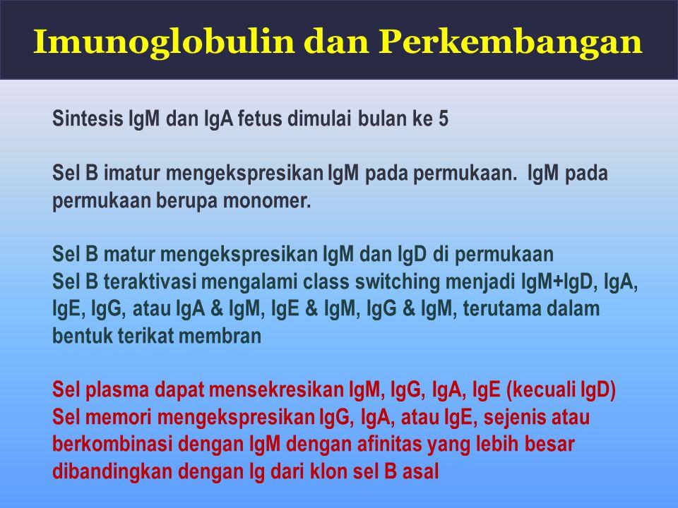 Imunoglobulin dan Perkembangan