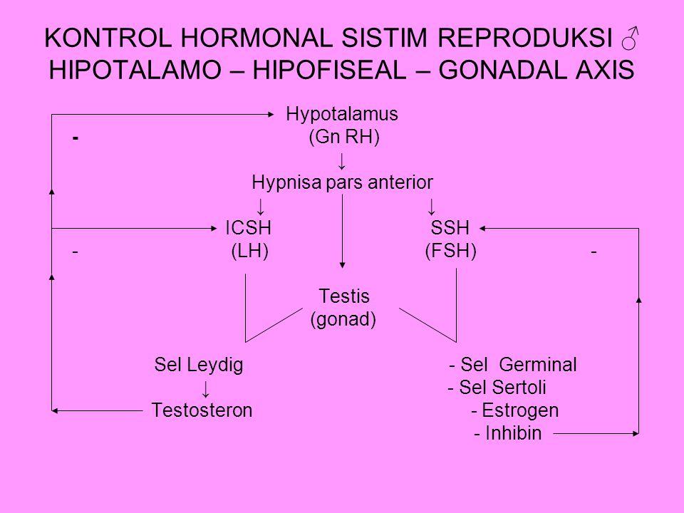 KONTROL HORMONAL SISTIM REPRODUKSI ♂ HIPOTALAMO – HIPOFISEAL – GONADAL AXIS