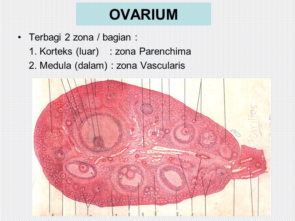 OVARIUM Terbagi 2 zona / bagian : 1. Korteks (luar) : zona Parenchima