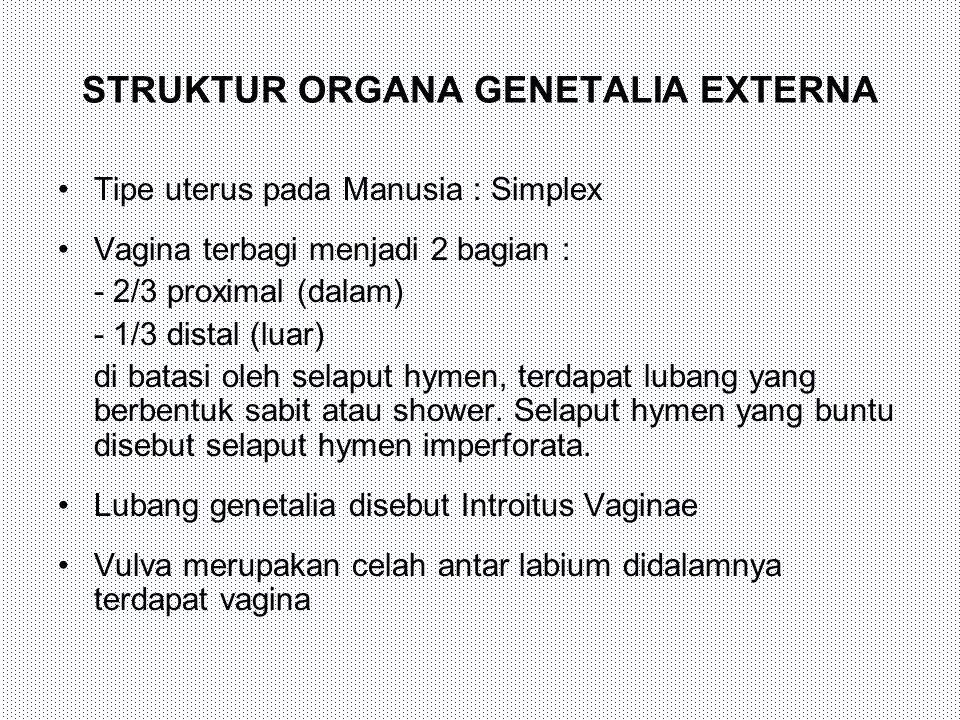 STRUKTUR ORGANA GENETALIA EXTERNA