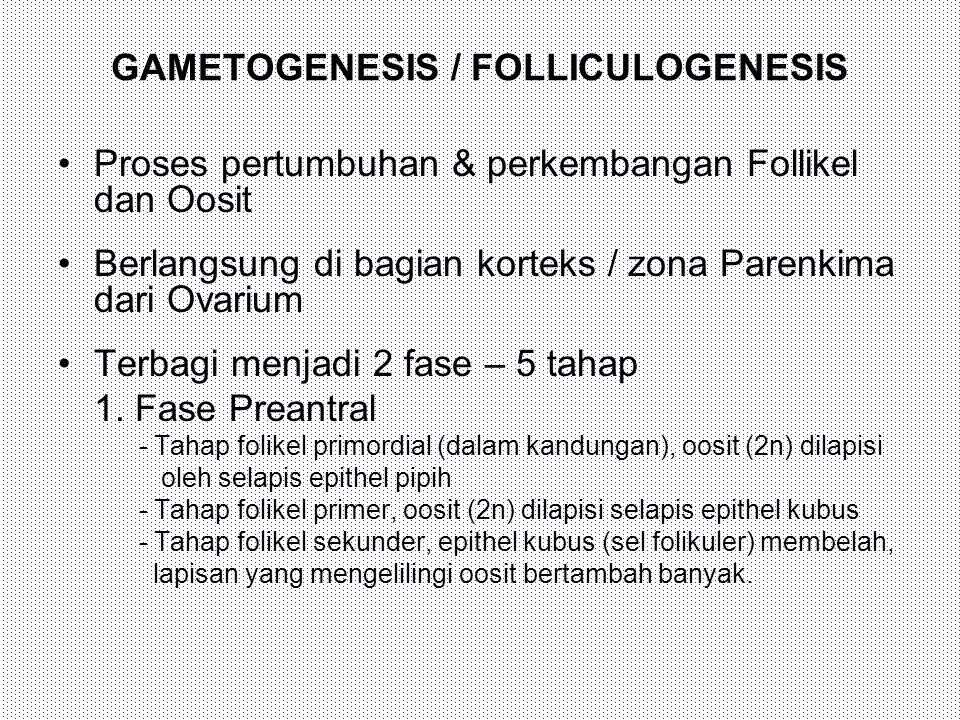 GAMETOGENESIS / FOLLICULOGENESIS