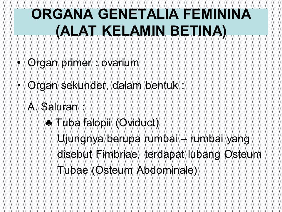 ORGANA GENETALIA FEMININA (ALAT KELAMIN BETINA)
