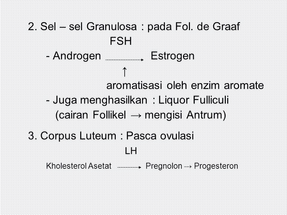 2. Sel – sel Granulosa : pada Fol. de Graaf