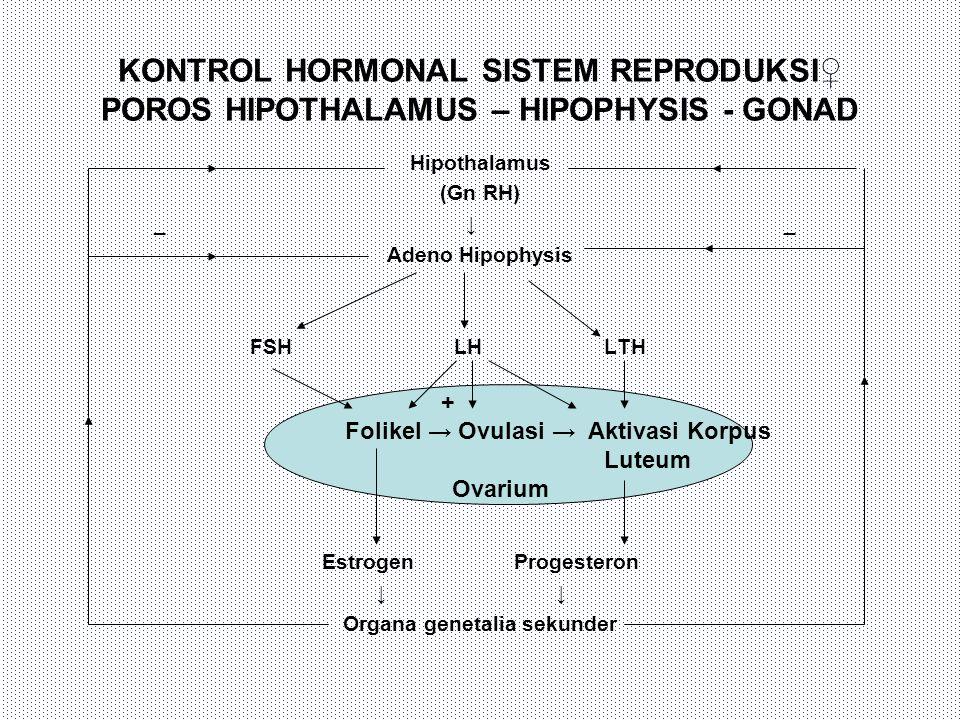 Organa genetalia sekunder