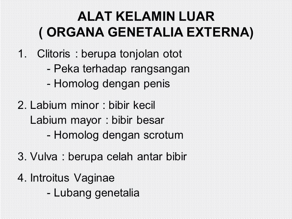 ALAT KELAMIN LUAR ( ORGANA GENETALIA EXTERNA)