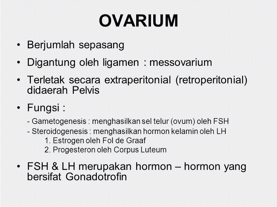 OVARIUM Berjumlah sepasang Digantung oleh ligamen : messovarium