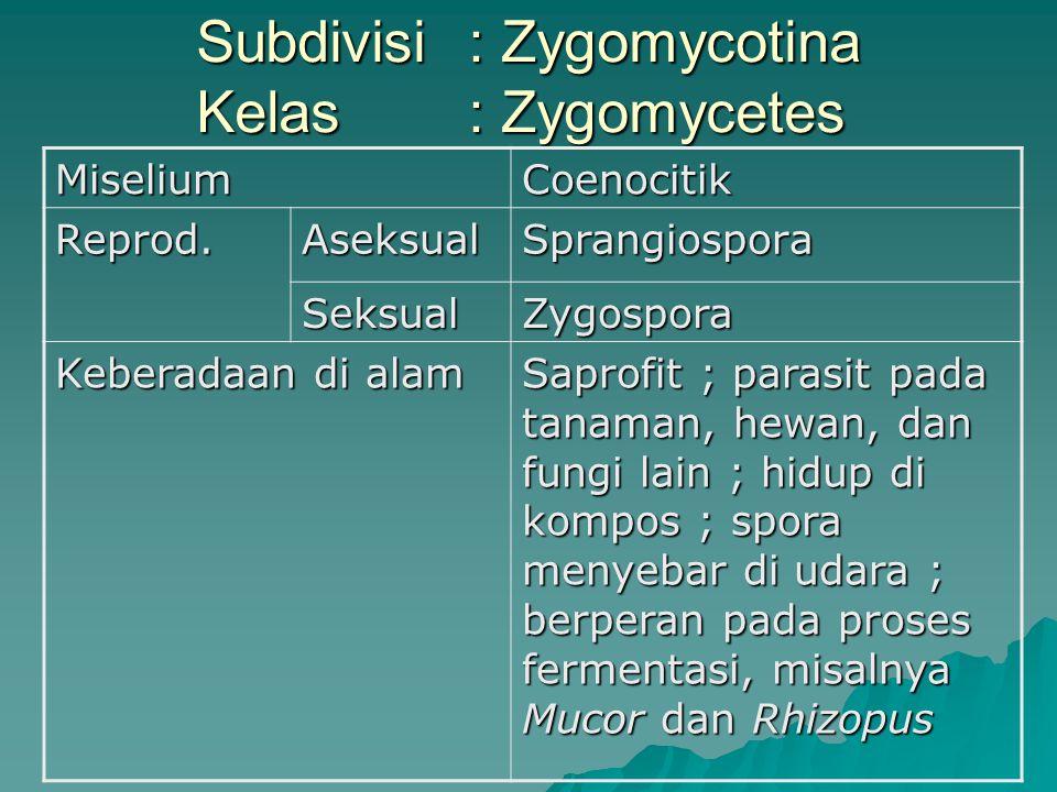 Subdivisi : Zygomycotina Kelas : Zygomycetes