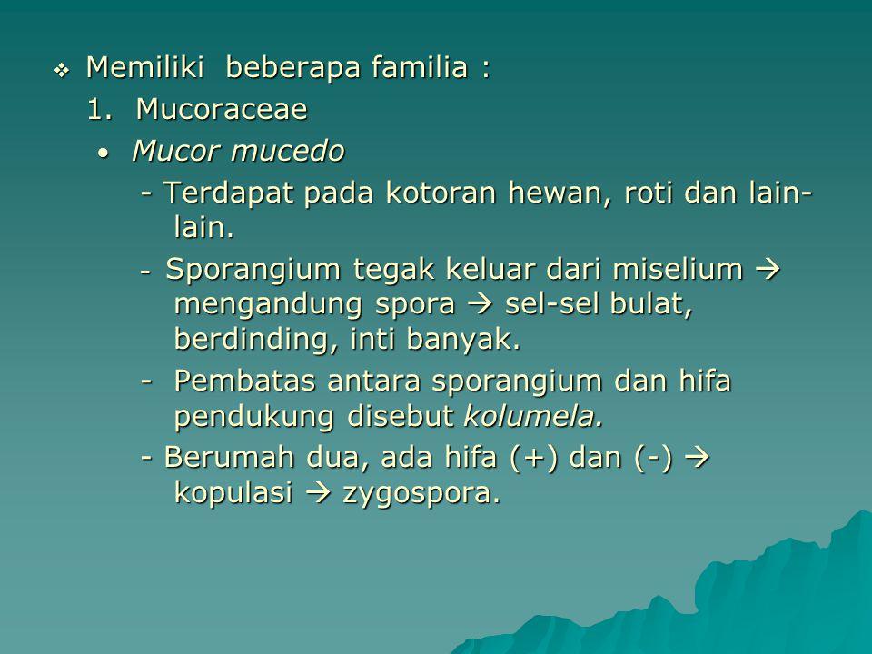 Memiliki beberapa familia : 1. Mucoraceae